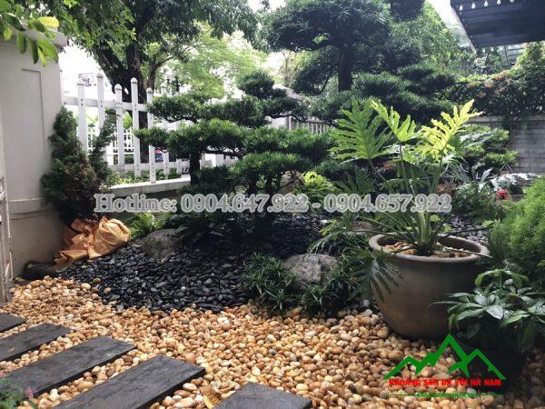 sỏi vàng tự nhiên rải sân vườn
