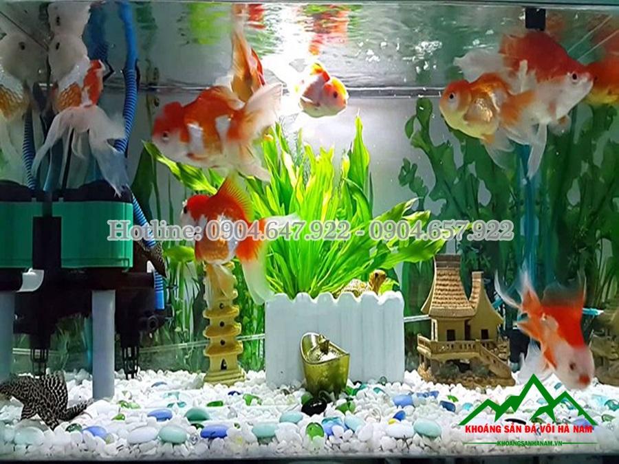 cung cấp sỏi rải nền bể cá